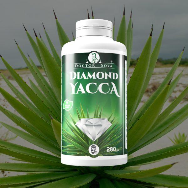 Diamond yacca big